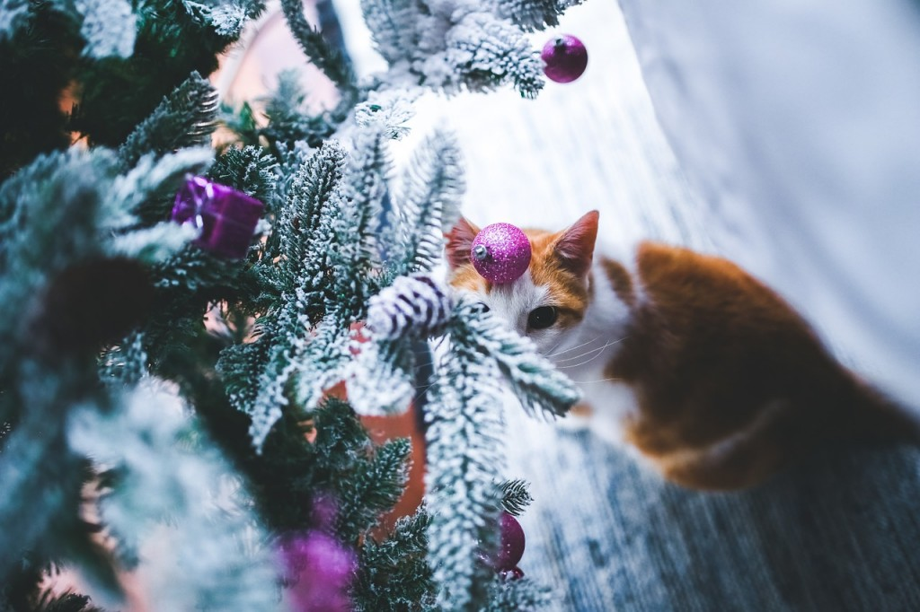 cat-791141_1280