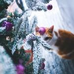 Noël dans l'air… #5